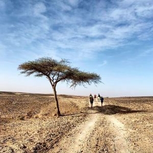 Stage #1 M'hamid Sahara Camp
